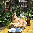Pig head and beer bottle